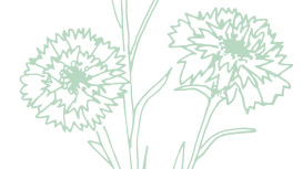 Light green Mary Kay skin care ingredient illustration of cornflowers