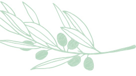 Light green Mary Kay skin care ingredient illustration of a squalane plant